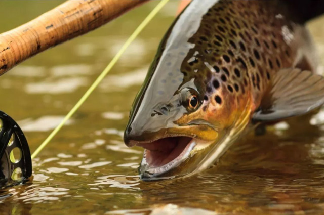 Private Trout Water Membership